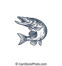 Salmon or trout grayling whitefish isolated monochrome sketch. Vector underwater animal, salmon hand drawn. Trout, char, grayling and whitefish in jump, fishing sport trophy, jumping fish