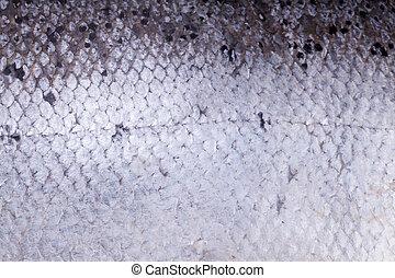 Atlantic salmon scales texture background