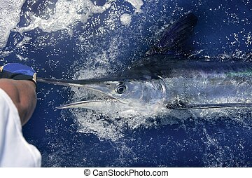 Atlantic white marlin big game sportfishing over blue ocean...
