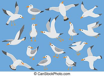 Atlantic white seabird fly at sky. Beach seagull at quay....
