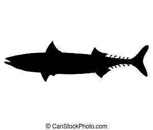 atlantische makrele, silhouette