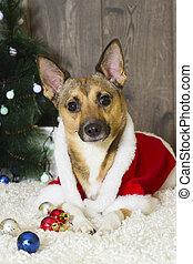 atmosfeer, kerstmis, dog