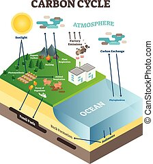Atmosphere carbon exchange cycle in nature, planet earth ecology science vector illustration diagram scene with ocean, animals, plants and industrial factory.