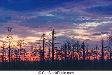 Atmospheric Night Landscape With Deadwood At Sunset