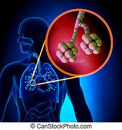 atmungs, lungen, -, alveolen, s, menschliche