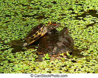 Stagno accatastato tartarughe immagini di archivi di for Stagno artificiale per tartarughe