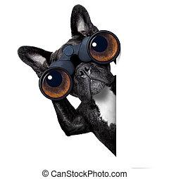 através, cão, binóculos, olhar