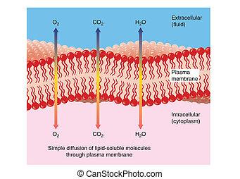 através, difusão, plasma, membrana