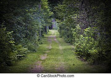 através, floresta, estrada, sujeira