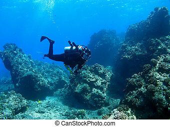 através, mergulhador, recife, natação