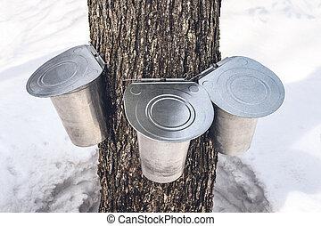 attaché, arbre, trois, seaux, rassembler, sève, érable