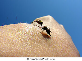 attaque, moustiques