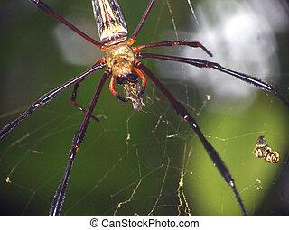 attaques, araignés, victime