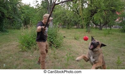 attaques, boule rouge, belge, formation, parc, malinois