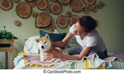 Attractive African American girl is stroking cute shiba inu...