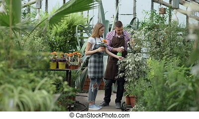 Attractive couple work in greenhouse. Man gardener in apron...