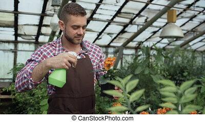 Attractive man gardener in apron watering plants and flowers...