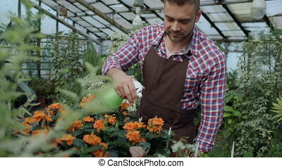 Attractive man gardener in apron watering plants and flowers...