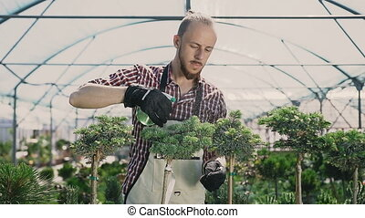 Attractive men gardener in green apron watering plants and flowers with garden sprayer in greenhouse. Care of plants, health, ecology. Drops of water on the background of the sun.
