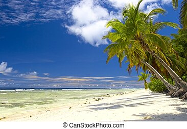 Attractive palmtrees in Indian Ocean, Maldive island, Gan