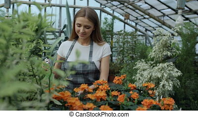 Attractive smiling woman gardener in apron watering plants and flowers with garden sprayer in greenhouse