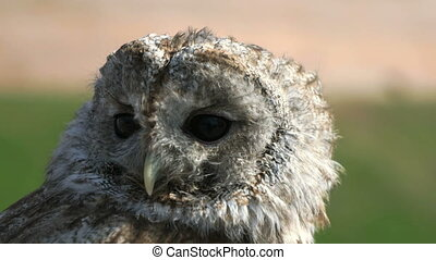 Attractive tamed owl in the city in the park outdoors....