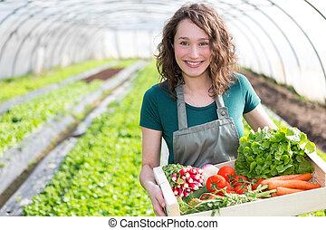 attraktiv, kvinna, ung, växthus, grönsak, skörda