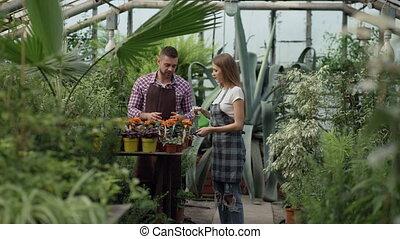 attraktive, paar, arbeit, in, greenhouse., frau, gärtner, in, schuerze, wässern betriebe, mit, kleingarten, sprühgerät, während, sie, ehemann, reden, ihm