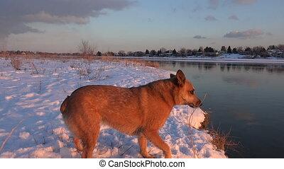 attraper, coucher soleil, chien, neige