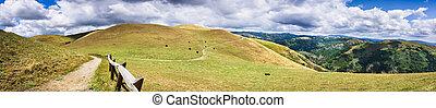 attraverso, francisco, sud, traccia, segno, scia, colline, baia, san, hillsides;, jose, pascolo, california, bestiame, area;, andando gita