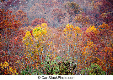 Atutmn colors in the mountains