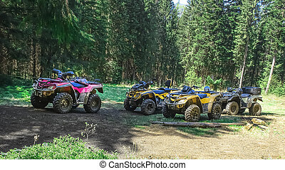 ATV Quad Bike in a pine forest in summer
