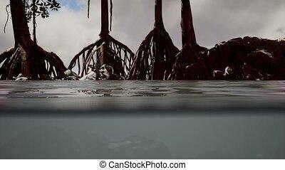 au-dessous, arbres, mer, mangrove, au-dessus, surface