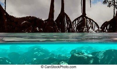 au-dessous, au-dessus, surface, mangrove, mer, arbres