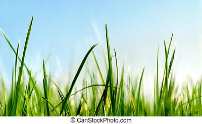 au-dessous, herbe