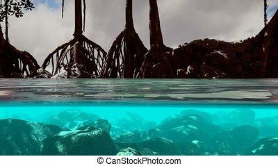 au-dessous, mer, au-dessus, arbres, mangrove, surface