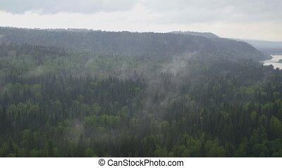 au-dessus, monter, nuageux, temps, forêt, conifère,...