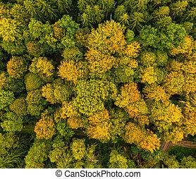 au-dessus, sur, arbre, forest., coup, sommets, vol, bourdon, automne, coloré