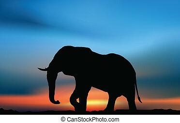 aube, éléphant africain