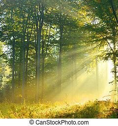 aube, forêt