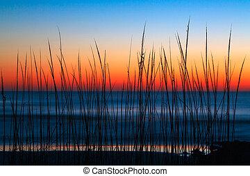 aube, herbe, dune