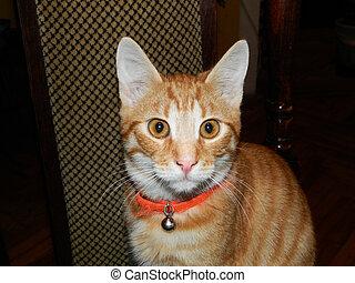 Auburn cat