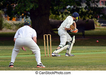 Cricket batsman try to blocks the ball
