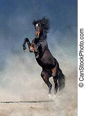 aufbäumen, pferd, dramatisch, hengst, auf