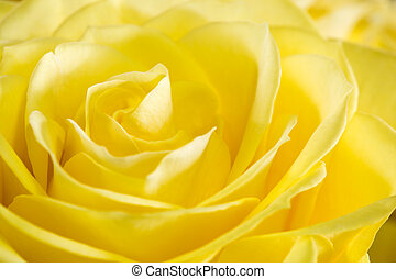 aufschließen, bild, von, gelb stieg