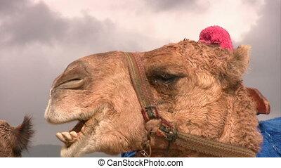 aufschließen, kamel