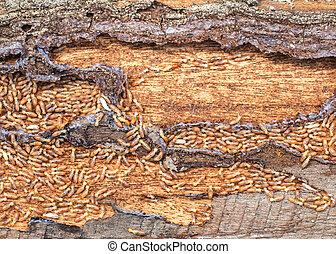 nest baum termiten bellen bilder fotografien und. Black Bedroom Furniture Sets. Home Design Ideas