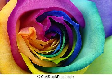 aufschließen, von, regenbogen, rose, herz