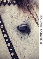auge, horse.