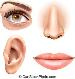 Ohr Mund Auge Nase Ohr Abbildung Vektor Mund Nase